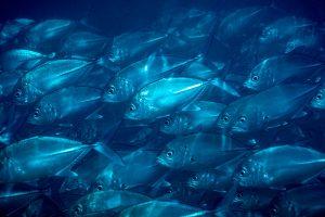 Grupo Política Pesquera